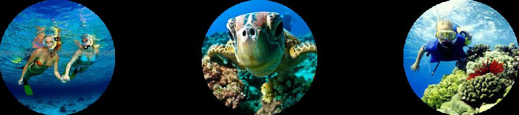snorkeling san jose del cabo